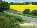 A country lane in the Lincolnshire Vales, South Kesteven, England.jpg