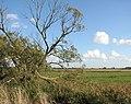 A fallen willow beside the Wherryman's Way - geograph.org.uk - 1552568.jpg