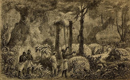 French explorer Paul Du Chaillu confirmed the existence of Pygmy peoples of central Africa A journey to Ashango-Land, and further penetration into equatorial Africa (1874) (14594947249).jpg