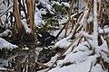 A moorhen on a snowbound Braunton Marsh - geograph.org.uk - 2201611.jpg