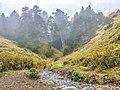 A small creek in the mountainous area of Hehuanshan.jpg