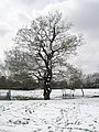 A tree showing the morning snowfall on an April lunchtime - geograph.org.uk - 754794.jpg