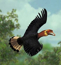 A waldeni flying.jpg