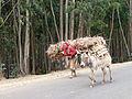 Addis Abeba-Collines d'Entoto (11).jpg
