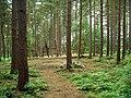 Adventure playground, Sherwood Pines - geograph.org.uk - 511834.jpg