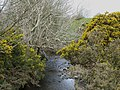 Afon Goch upstream of Pont Felin Esgob - geograph.org.uk - 1230464.jpg