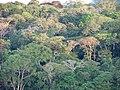 AfriSAR studies Gabon's rainforest (50911439873).jpg