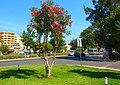 Albufeira (Portugal) (10016926783).jpg