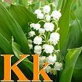 Alfabet roślin - literka K.jpg