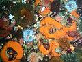 Anemones and sponges at Stonehenge Reef P4137434.JPG