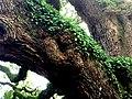 Angel Oak greenery.jpg