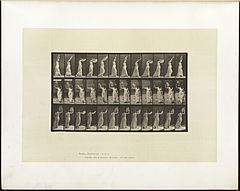 Animal locomotion. Plate 41 (Boston Public Library).jpg