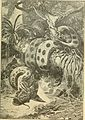 Animals in action; studies and stories of beasts, birds and reptiles; their habits, their homes and their peculiarities (1901) (14753041334).jpg