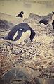 Antártida. Década de 1970. 59.jpg