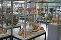 Antikenmuseum der Universität Heidelberg 013.jpg