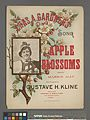 Apple blossoms (NYPL Hades-449111-1157298).jpg