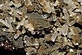 Aragonite, sphalerite, goethite.jpg