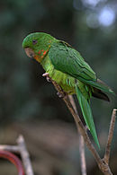 A green parrot with a light-green underside and a yellow-speckled throat