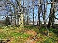 Arboretum Zürich 2012-03-28 15-26-12 (P7000).JPG