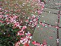 Arenbergpark-grote-liefde.jpg
