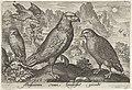 Arend en andere roofvogels.jpeg