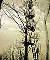 Artillery observation post in tree, French battlefront before Arras, WWI (29345030171).jpg