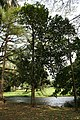 Artocarpus Heterophyllus 03.jpg