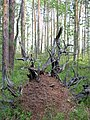Asinovsky District, Tomsk Oblast, Russia - panoramio (23).jpg
