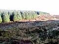 At the head of the Glen Burn - geograph.org.uk - 629263.jpg