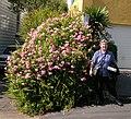 Auckland, NZ (201561259) (2).jpg