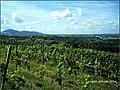 August Landscapes Rhine Valley - Master Rhine Valley Photography 2014 Freiburg im Breisgau - panoramio (3).jpg