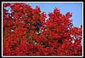 Autumn Leaves begin to fall-008 (5659677228).jpg