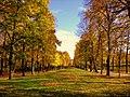 Autumn alley - Flickr - Stiller Beobachter.jpg