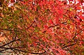 Autumn foliage 2012 (8252571237).jpg
