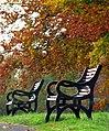 Autumnal benches, Barnetts Demesne - geograph.org.uk - 1036318.jpg