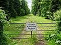 Avenue of trees, Panmure estate - geograph.org.uk - 17381.jpg