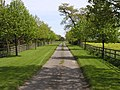 Avenue of trees - geograph.org.uk - 9399.jpg