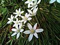 Bílá květina.jpg
