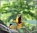 BIRDS PARADISE (7777935642).jpg