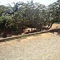 Bachio dos Bernardos - panoramio (5).jpg