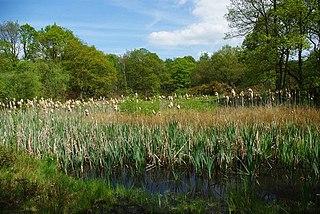 Danbury Ridge Nature Reserves Essex Wildlife Trust Nature reserve