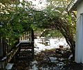 Backyard arbor bush bending over like a roof.jpg