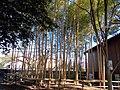 Bamboo groves in Daizenji Tamatare-gu.jpg