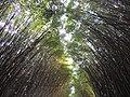 Bambuzais, Caminhos do Sol. - panoramio.jpg