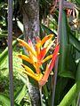 Banana flower1.jpg