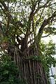 BanyanTree-NationalMuseumofSingapore-20100711-03.jpg