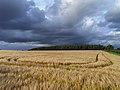 Barley, Oakley - geograph.org.uk - 1595515.jpg