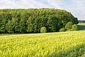 Barntrup - 2015-05-22 - LSG-3919-0031 (7).jpg