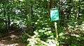 Bastei bei Rathen 117.JPG