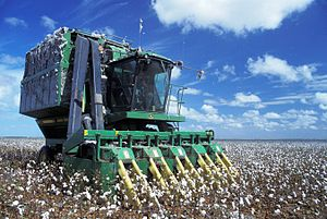 Cotton picker - Cotton picker at work
